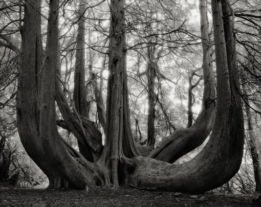 Beth Moon – The Great Western Red Cedar