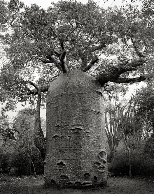 Beth Moon – The Ifaty Teapot