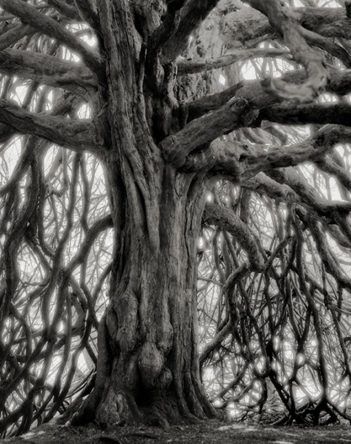 Beth Moon – The Whitting Name Yew
