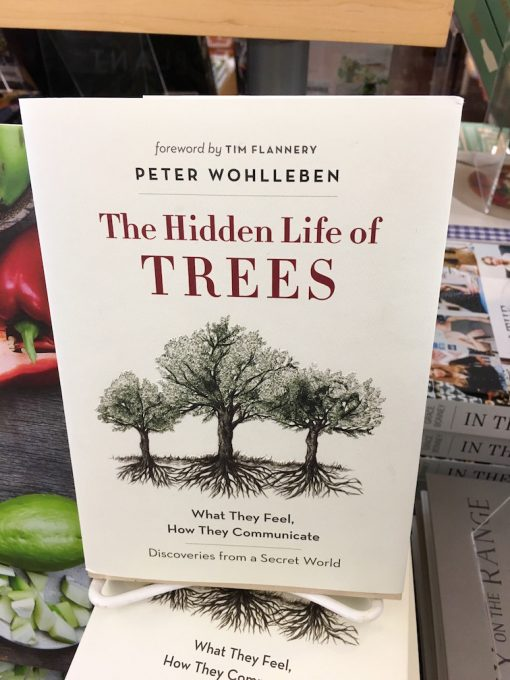 Baumhausblog – The hidden life of trees
