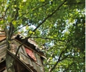 Ein von Kindern gebautes Baumhaus soll abgerissen werden!