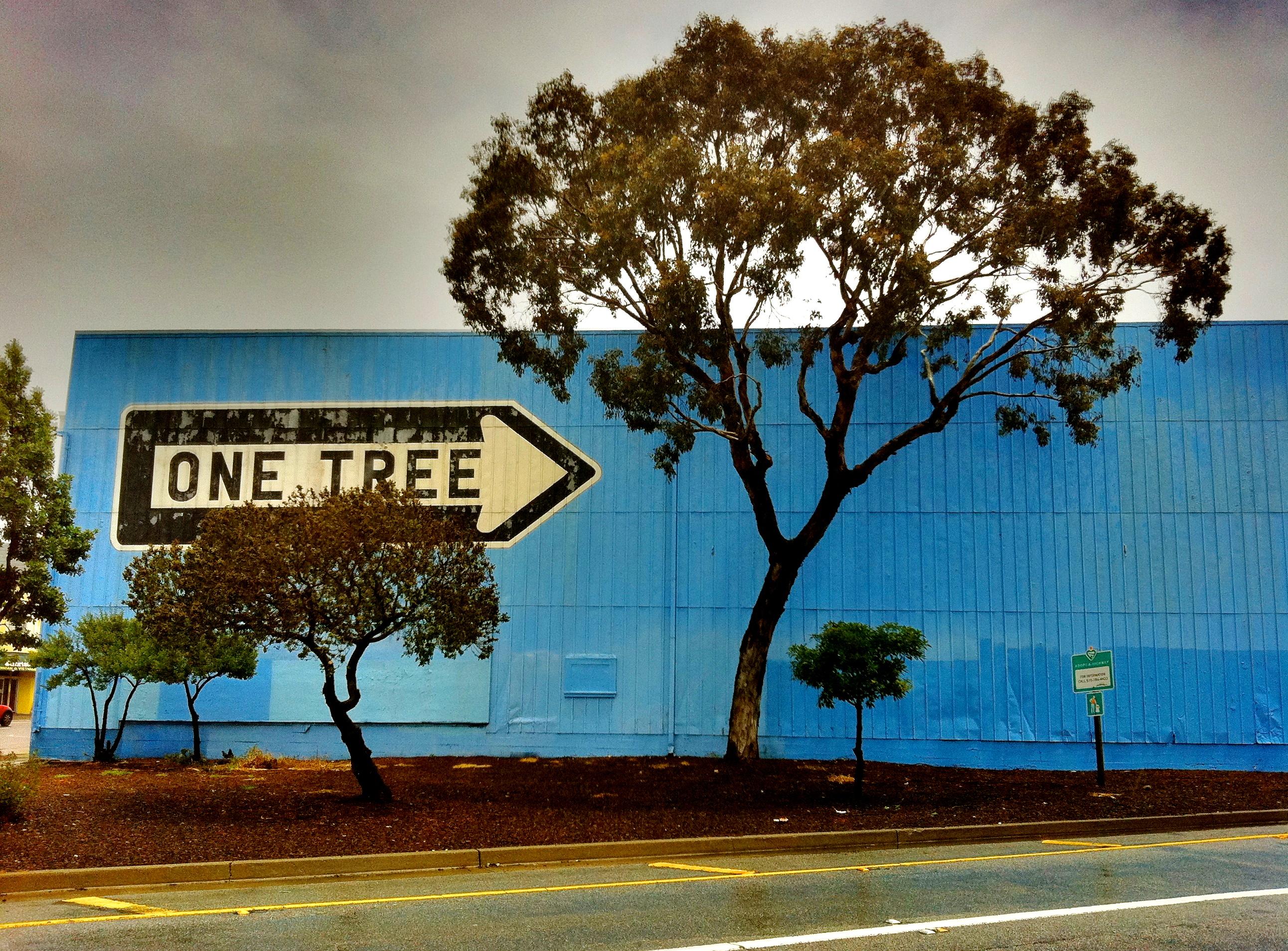 Weil es in diesem Blog nicht nur um Baumhäuser geht, sondern auch um Bäume und Häuser, heute dieses Bild. Aufgenommen 2011 in San Francisco.