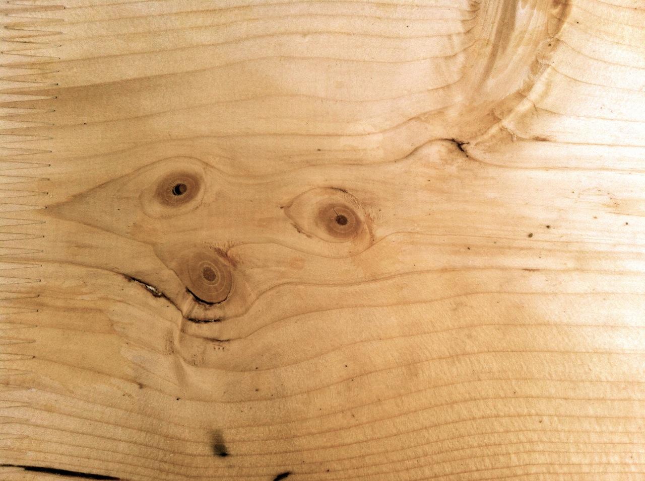 Die Gesichter der Bäume