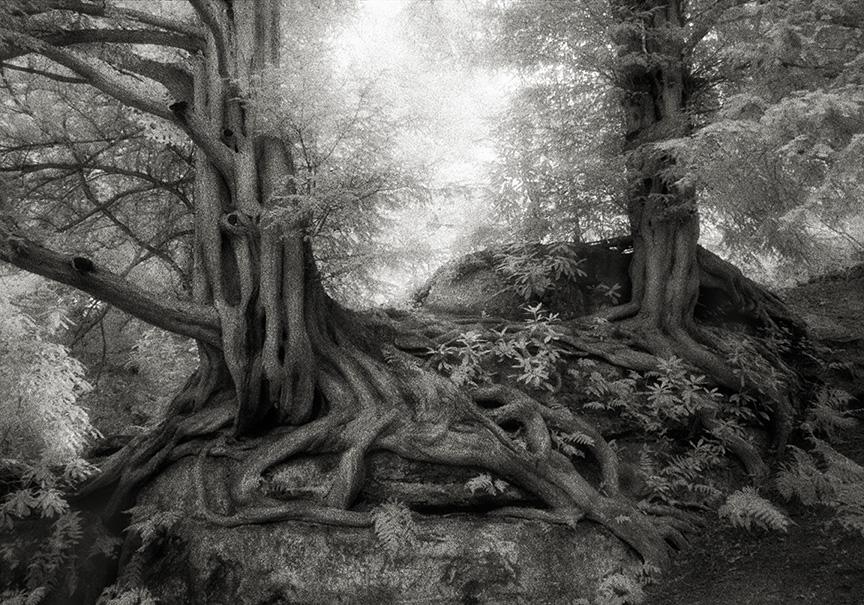 Kennst du die ältesten Bäume der Welt?