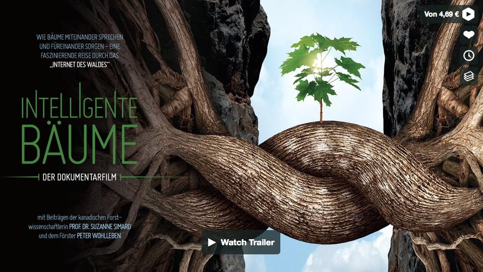 Schon vom Wood Wide Web gehört?
